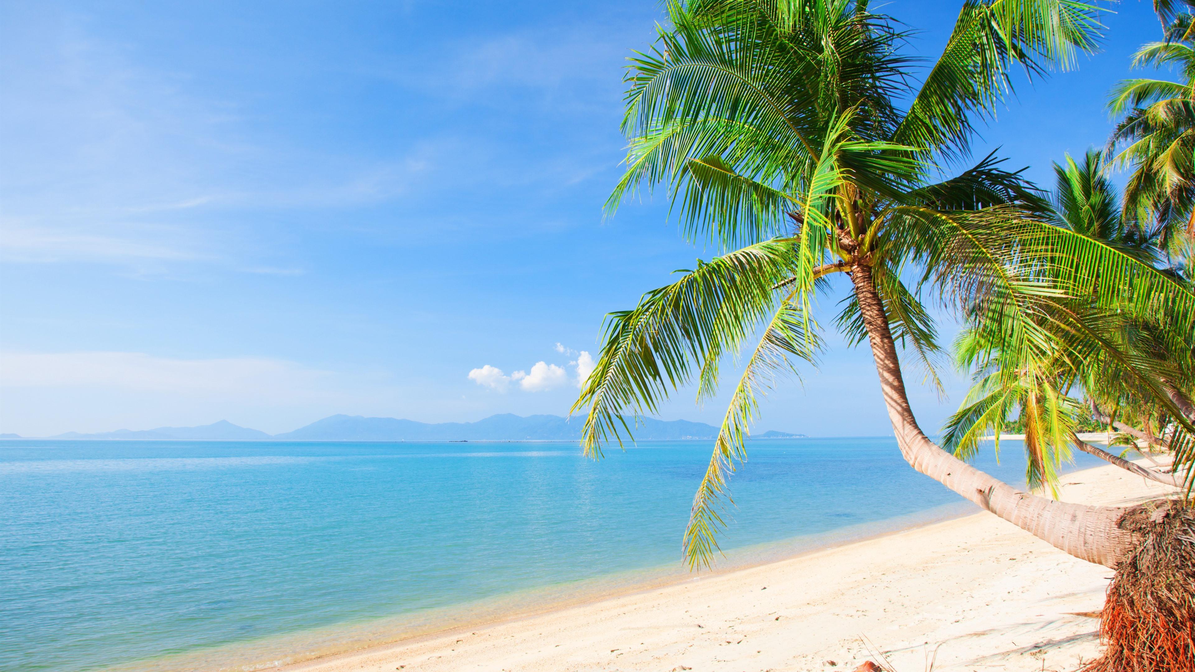 strand, palmen, meer, tropisch, sommer 3840x2160 uhd 4k