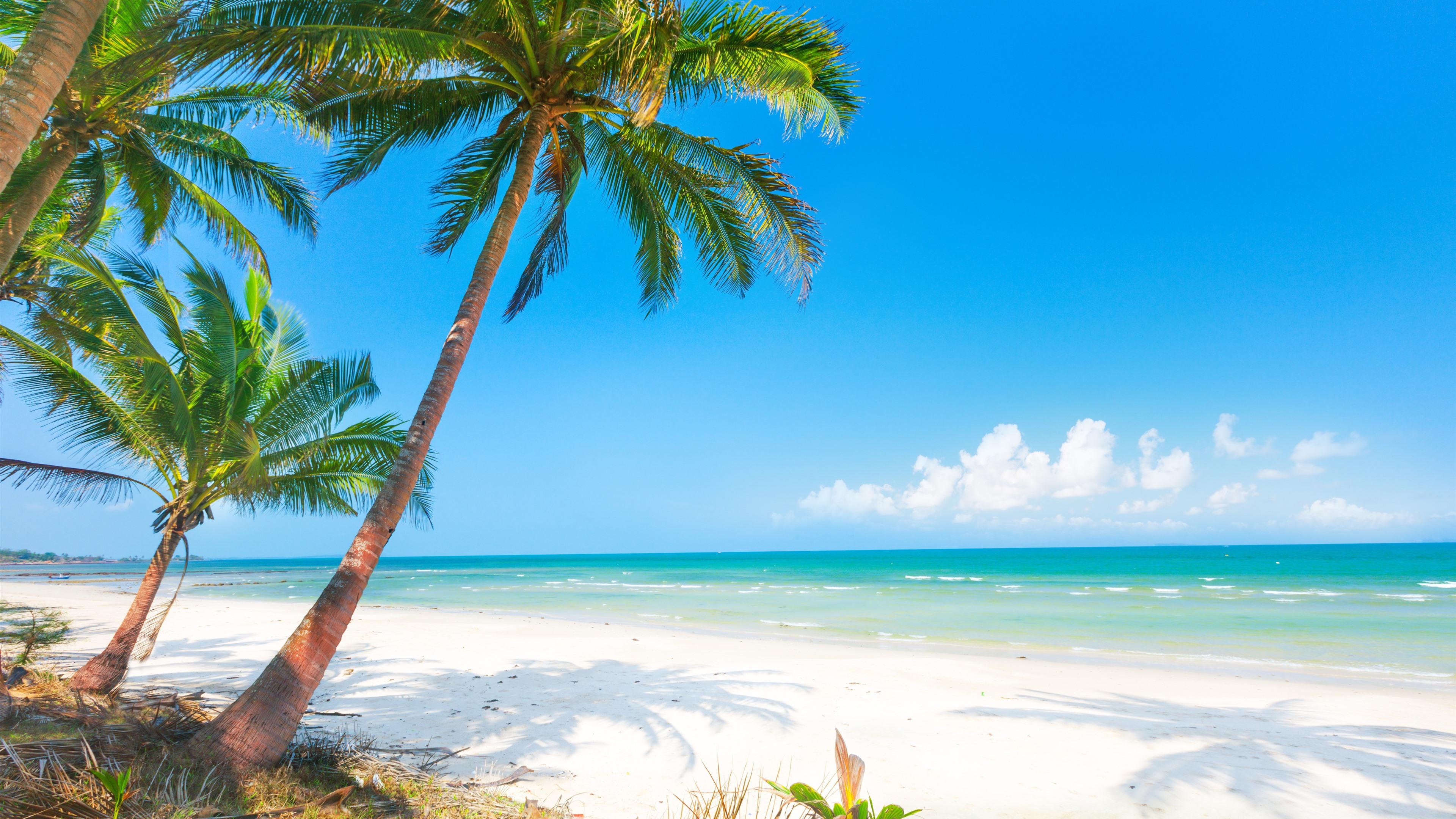 Sommer, Strand, Palmen, Meer 3840x2160 UHD 4K