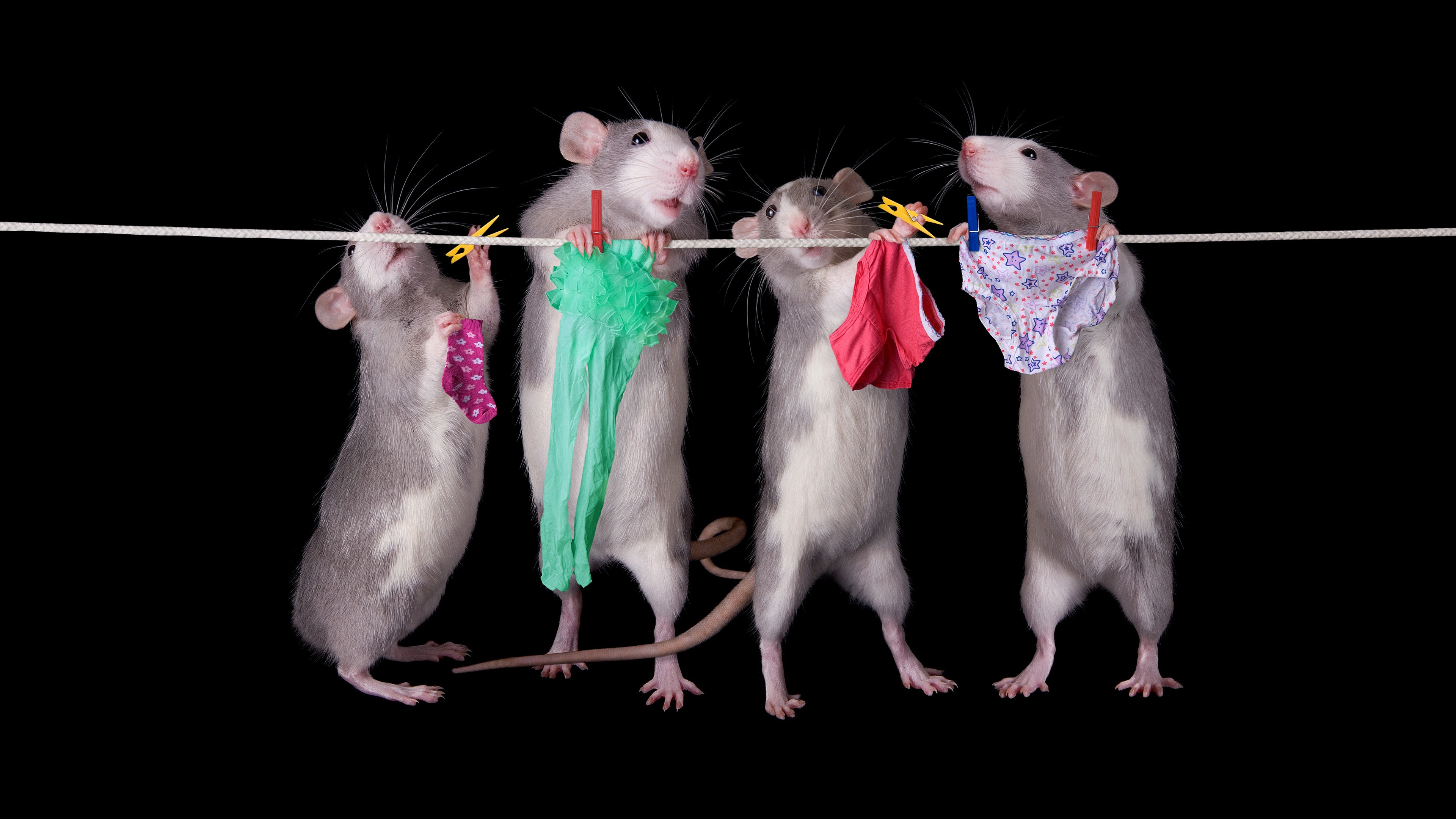 wallpaper four rats working 3840x2160 uhd 4k picture image. Black Bedroom Furniture Sets. Home Design Ideas