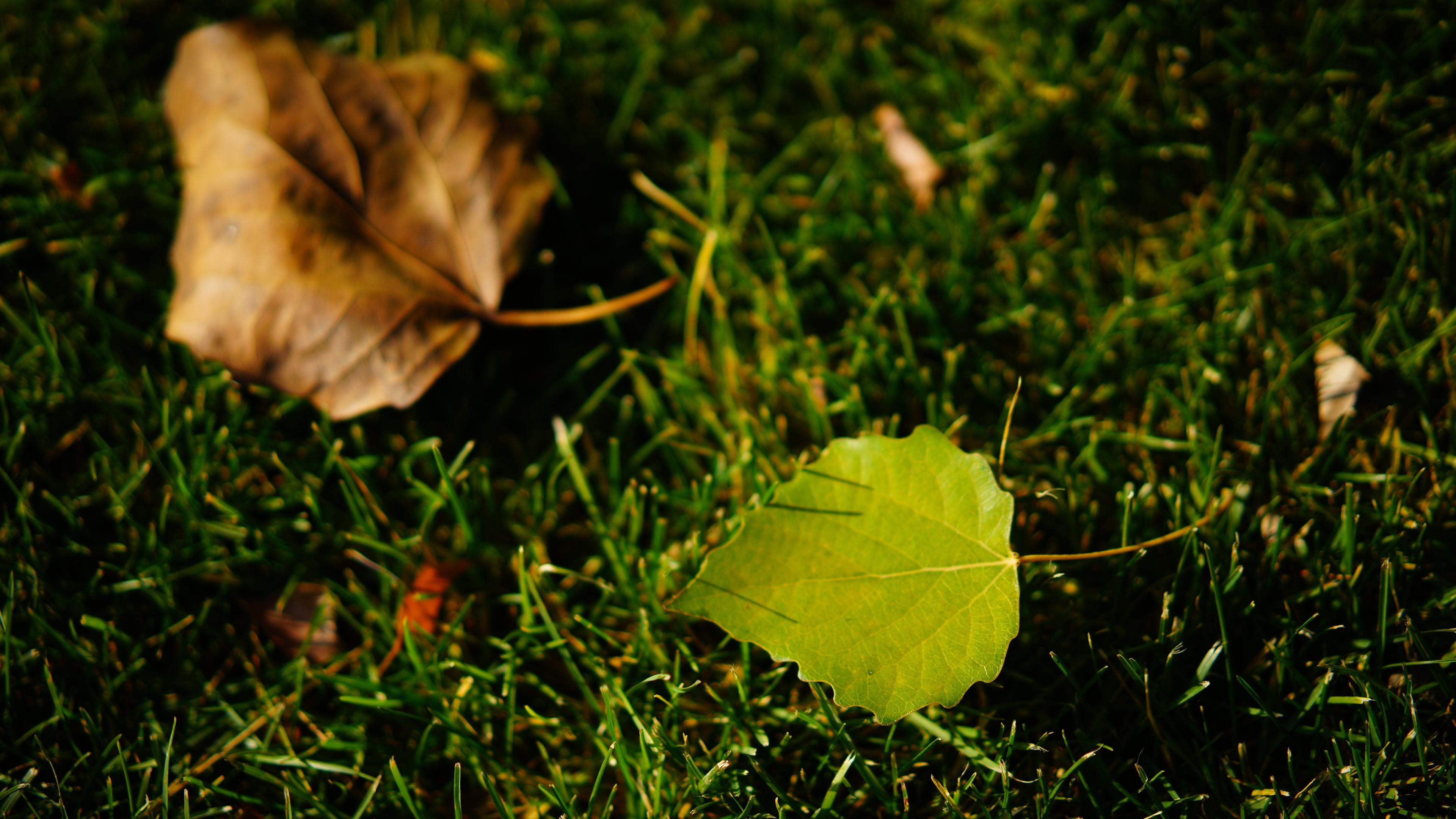 Wallpaper Green Leaf, Grass, Light 5120x2880 UHD 5K