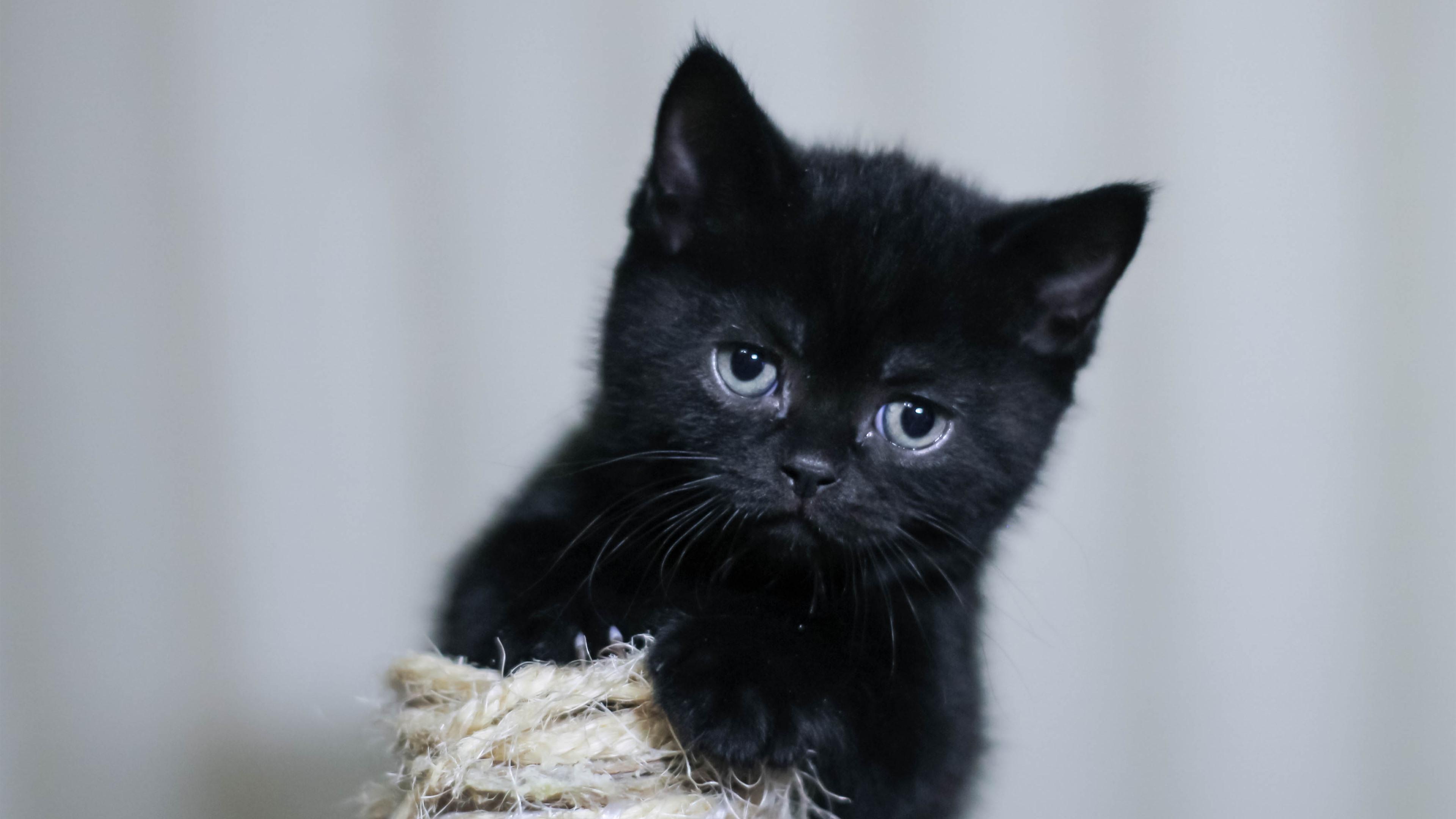 黑色小猫,蓬松 4k