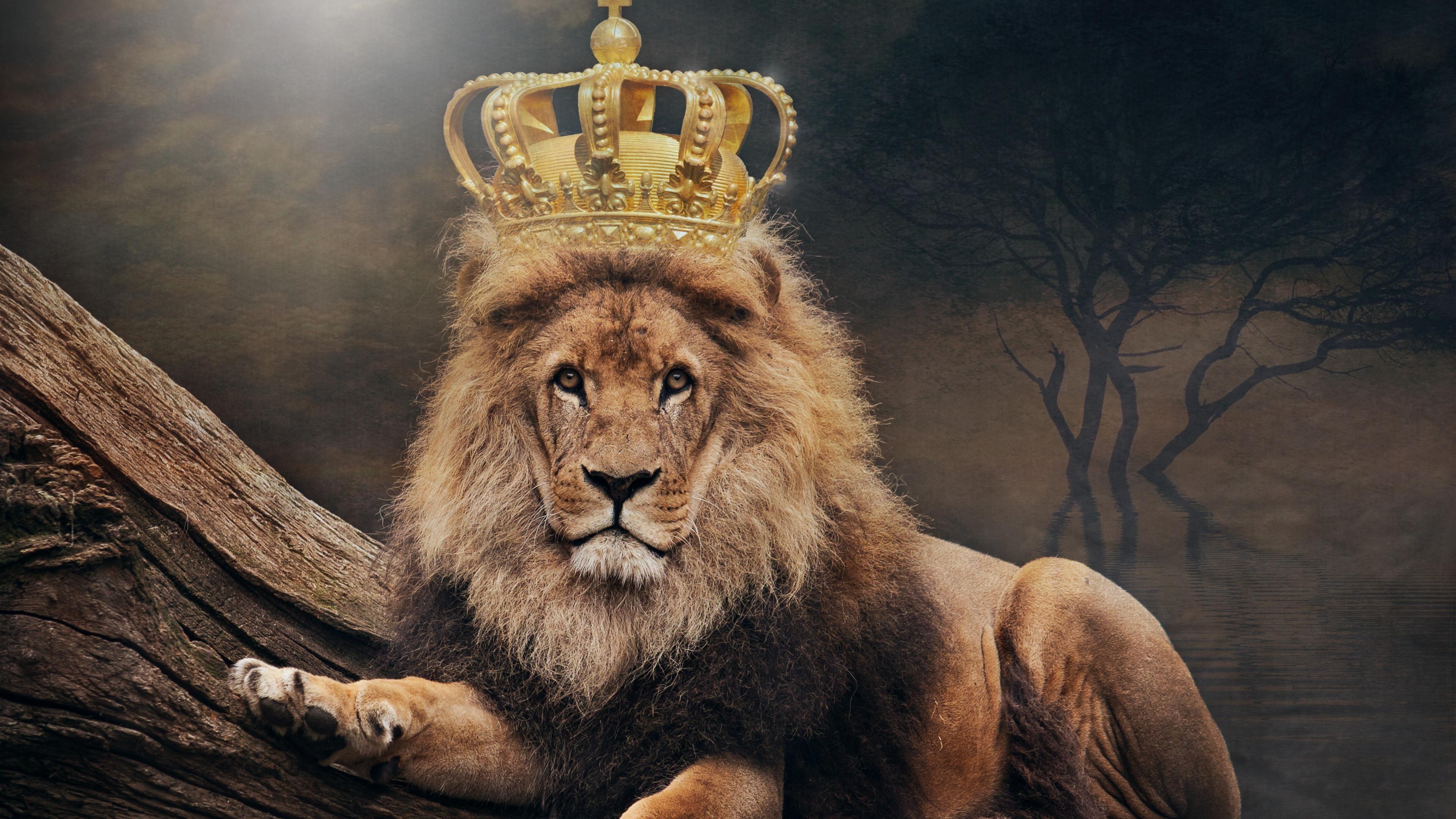 Wallpaper Lion, king, crown 3840x2160 UHD 4K Picture, Image