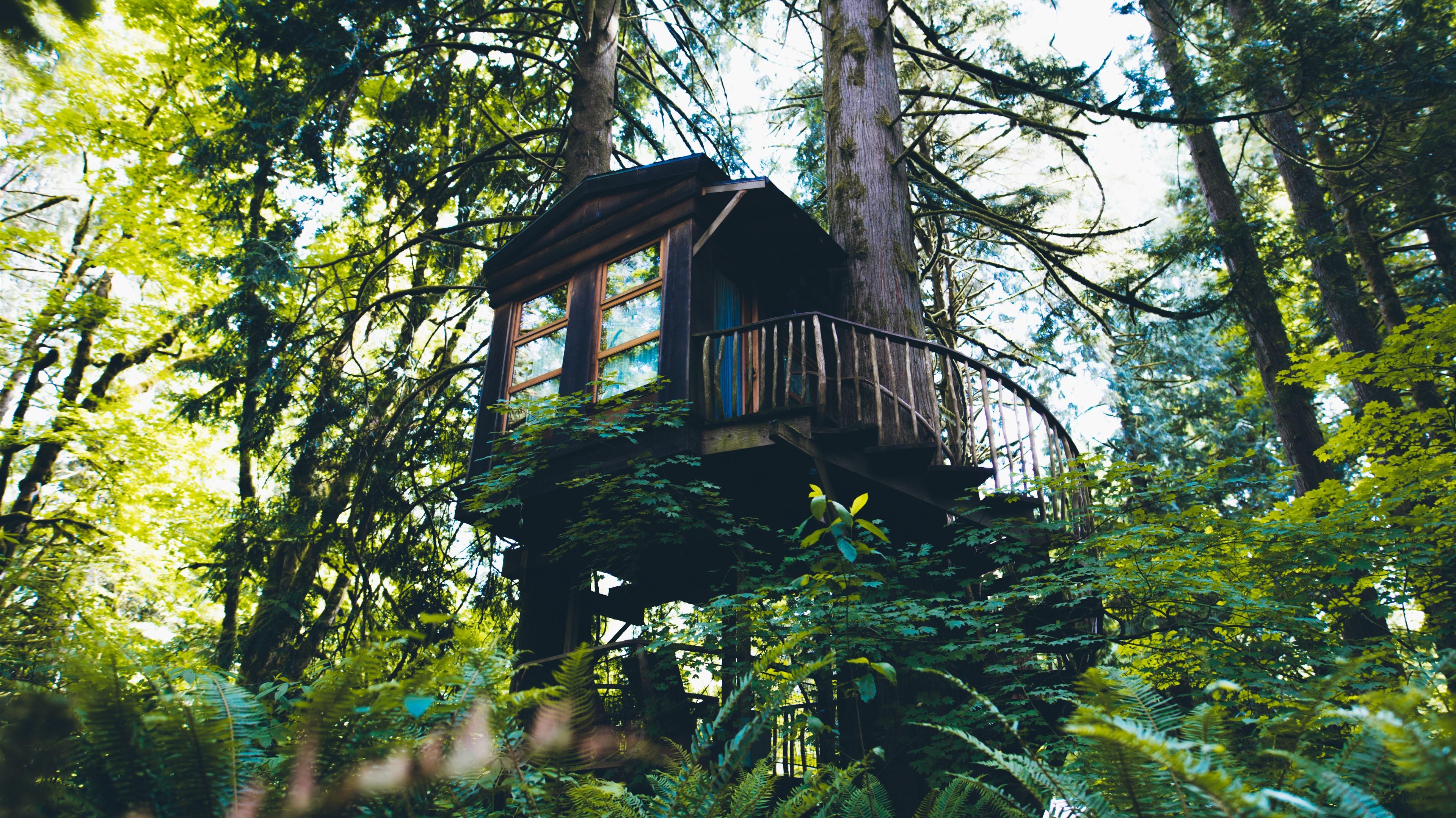 Fondos De Pantalla Casa Del árbol Bosque Verde 5120x2880