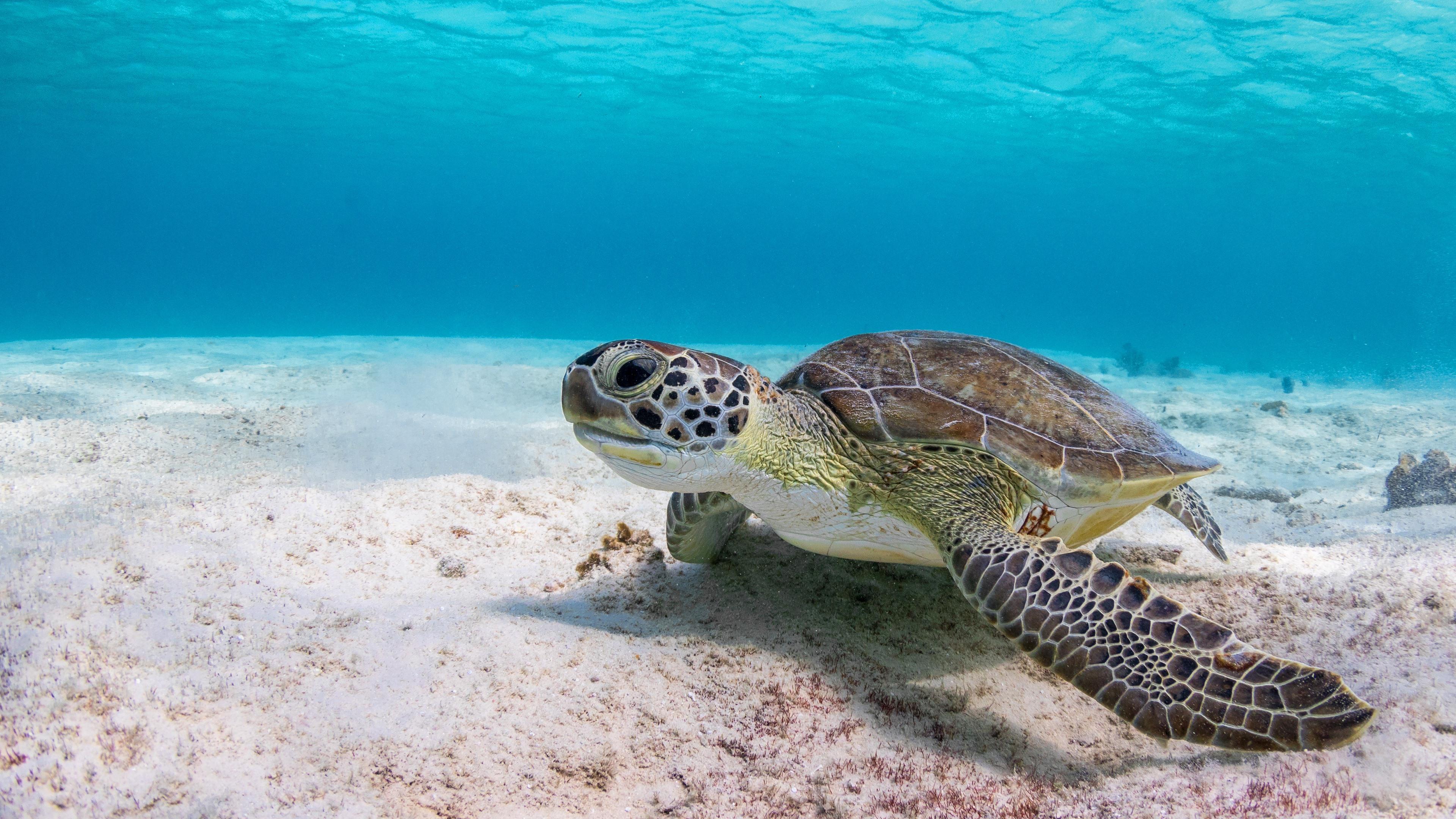 Wallpaper Turtle, underwater, sea 3840x2160 UHD 4K Picture ...