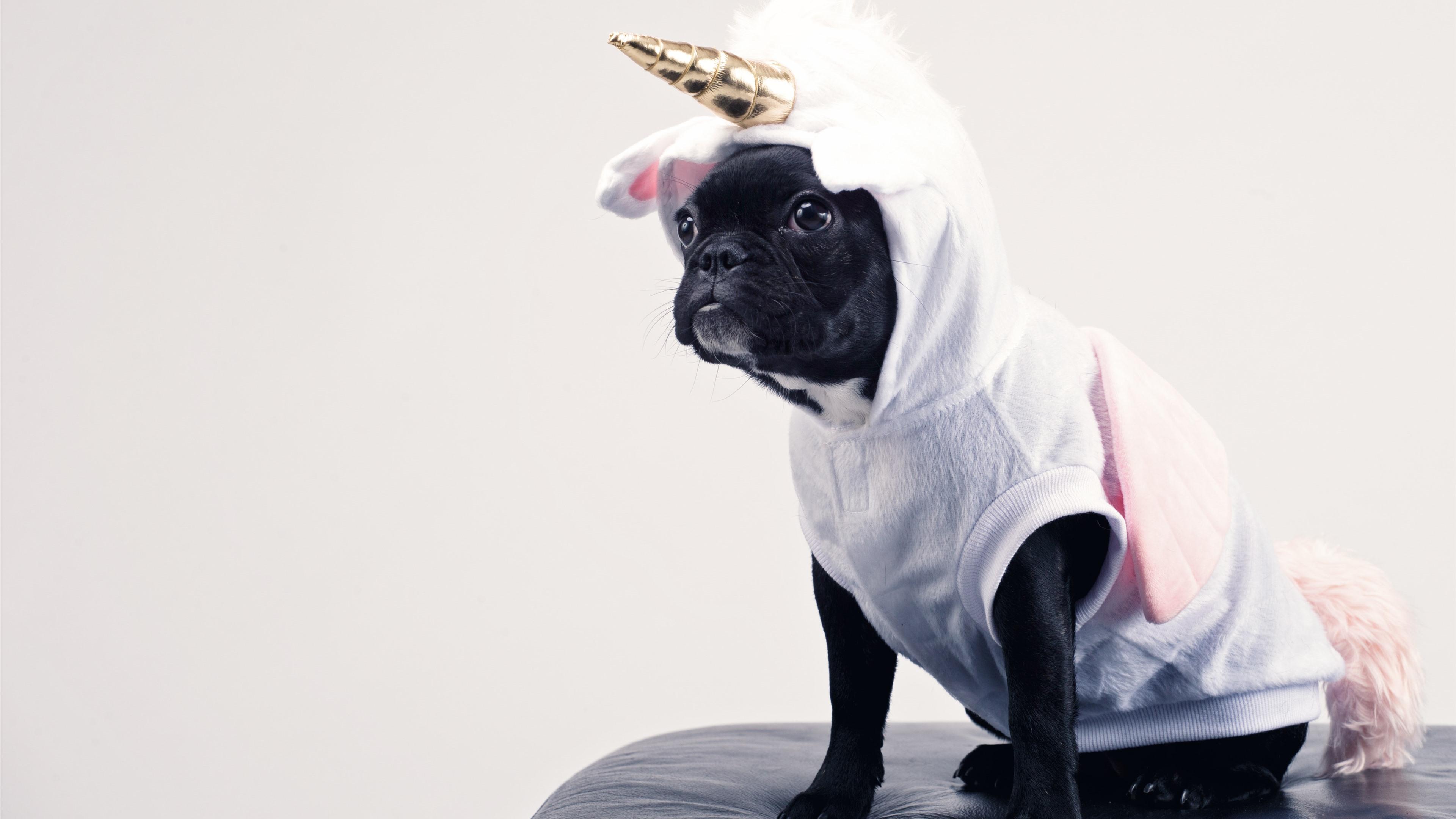 Wallpaper Funny dog, unicorn 3840x2160 ...