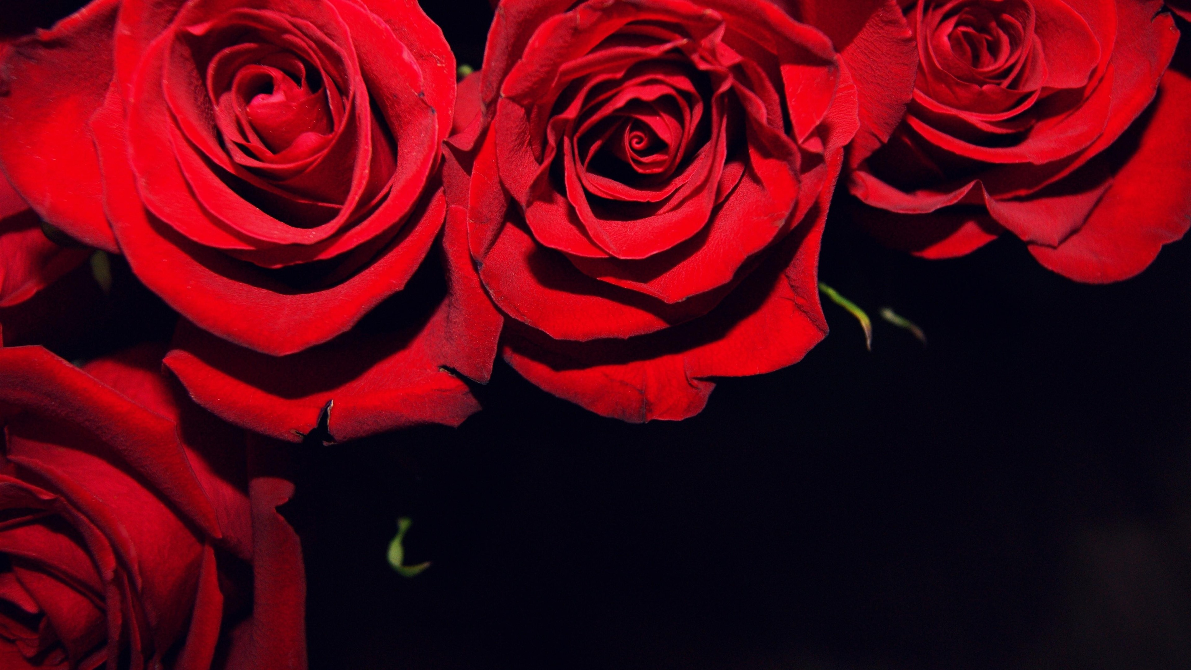 Wallpaper Red Roses Black Background 3840x2160 Uhd 4k Picture Image