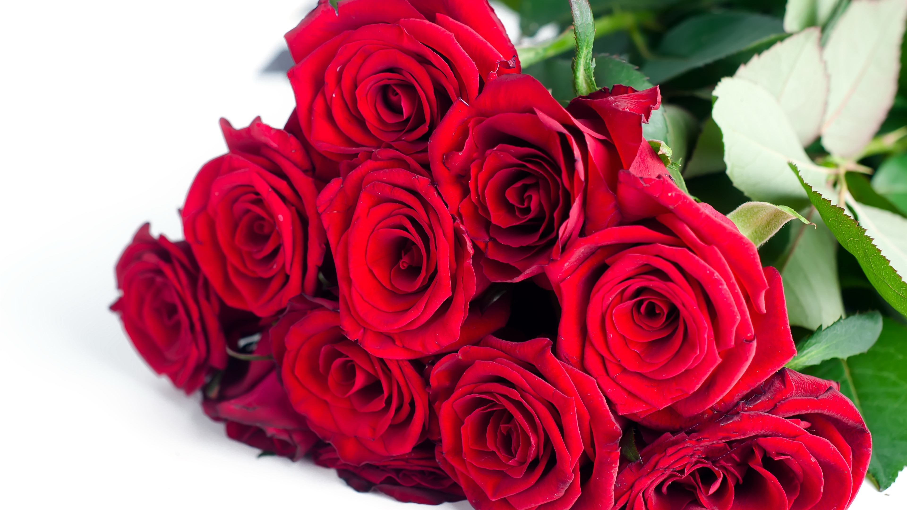 Wallpaper Red roses, bouquet, flowers, white background
