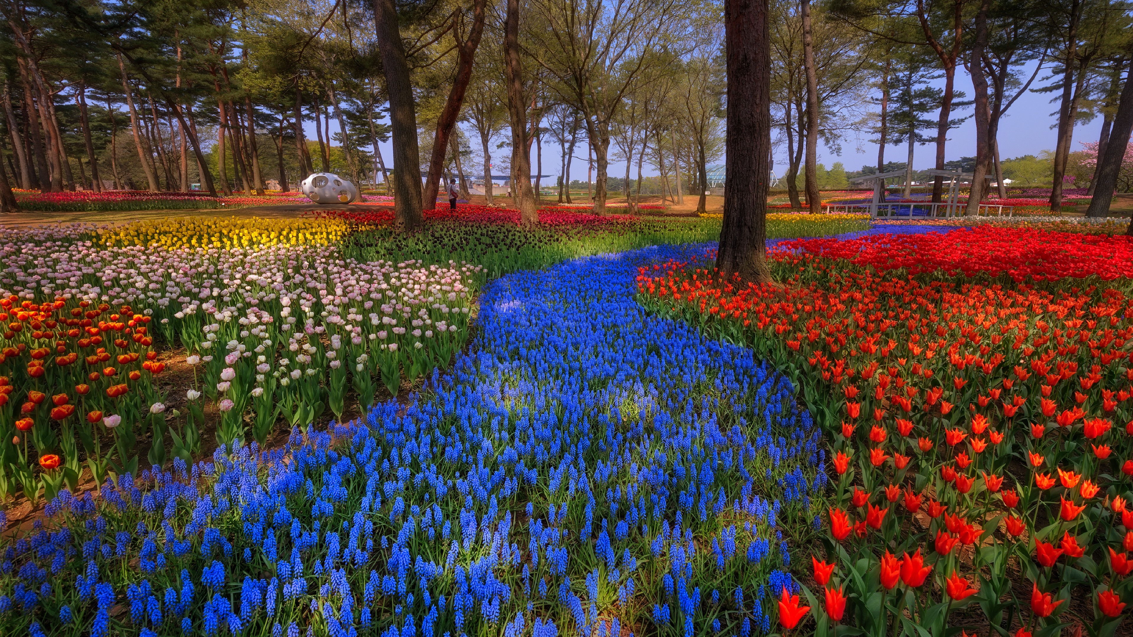 Wallpaper Japan Park Trees Colorful Tulips Spring