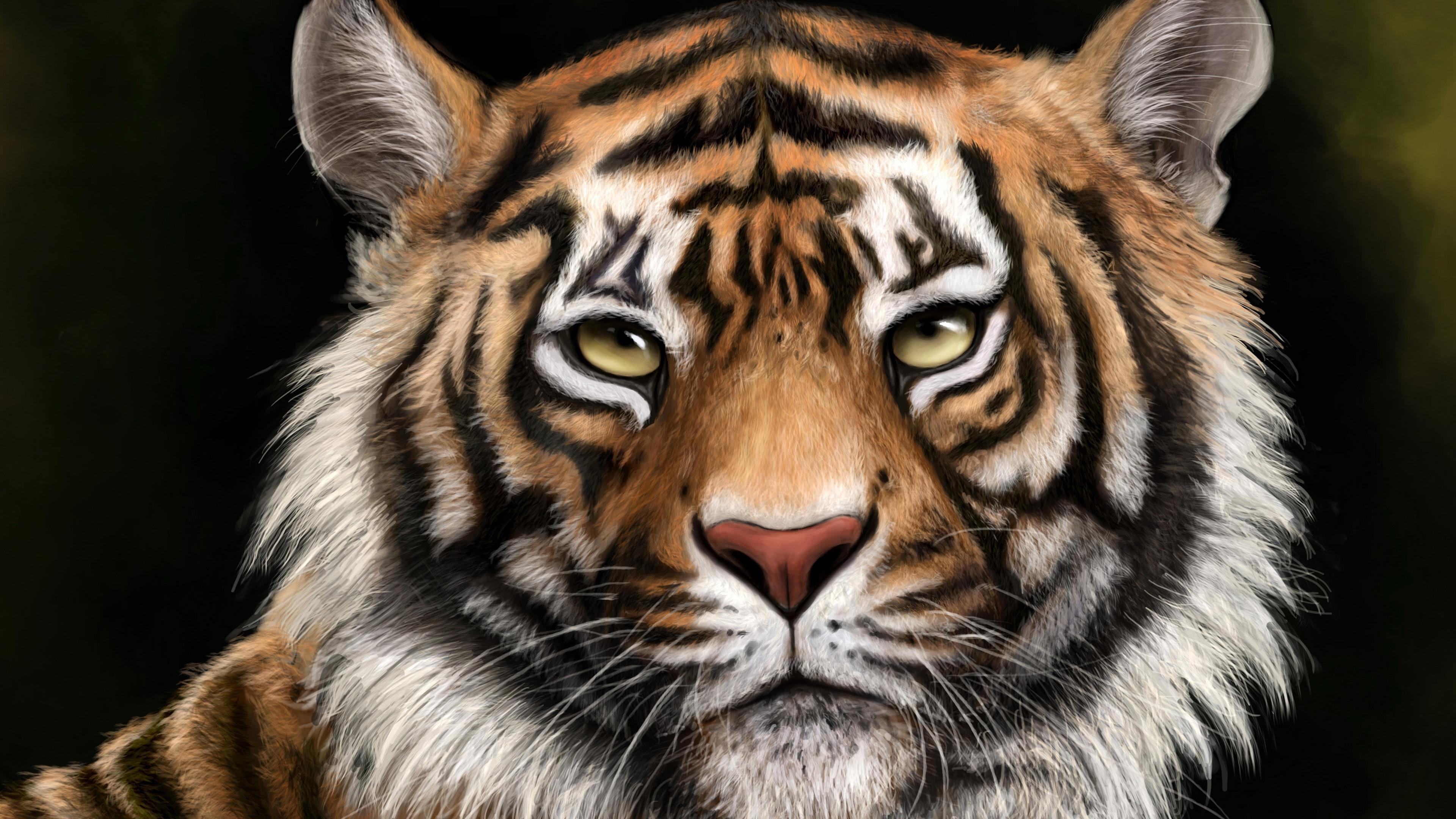 Wallpaper Tiger, face, eyes, look, animal 3840x2160 UHD 4K