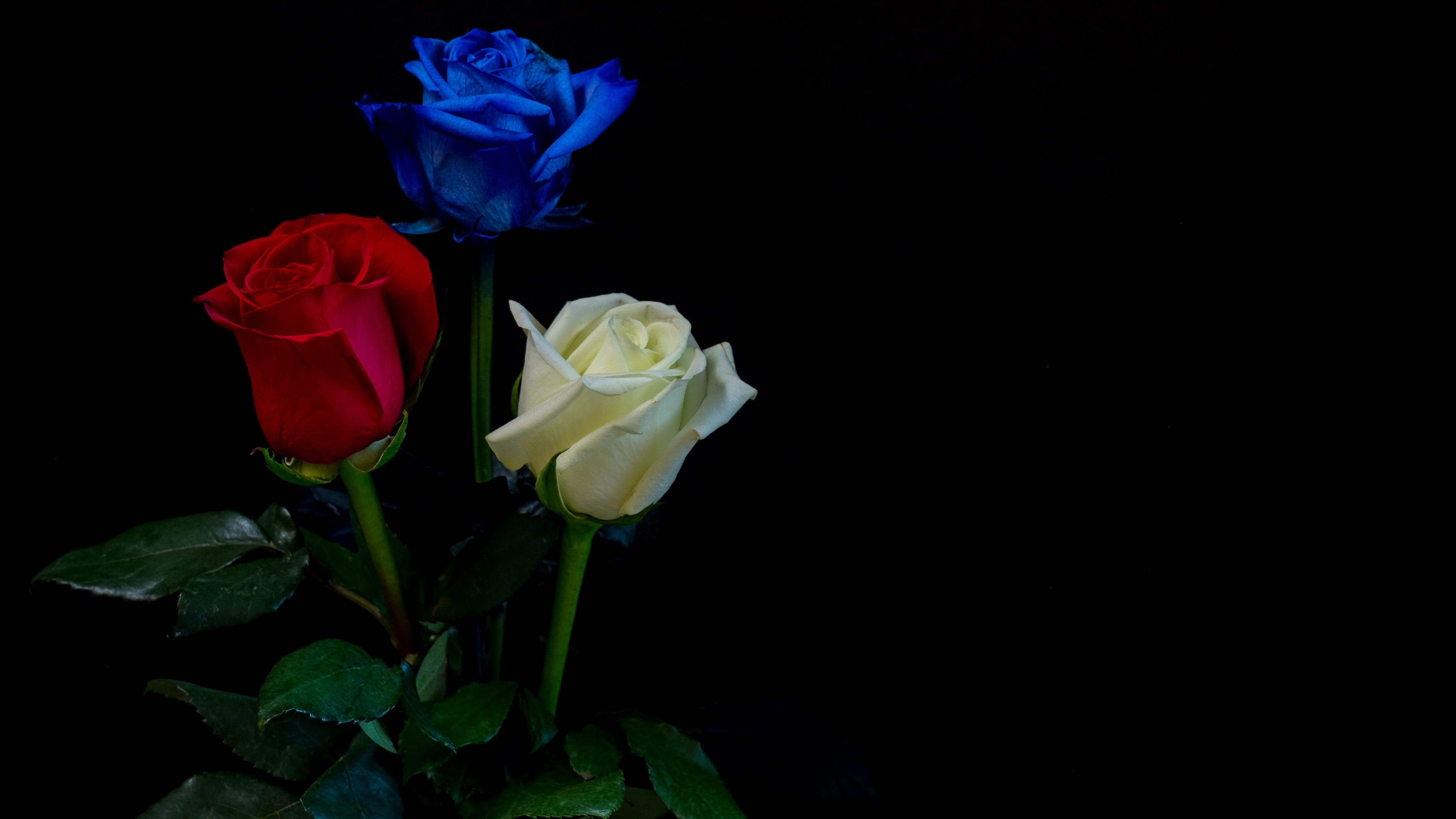 Wallpaper White Red Blue Three Colors Roses Black