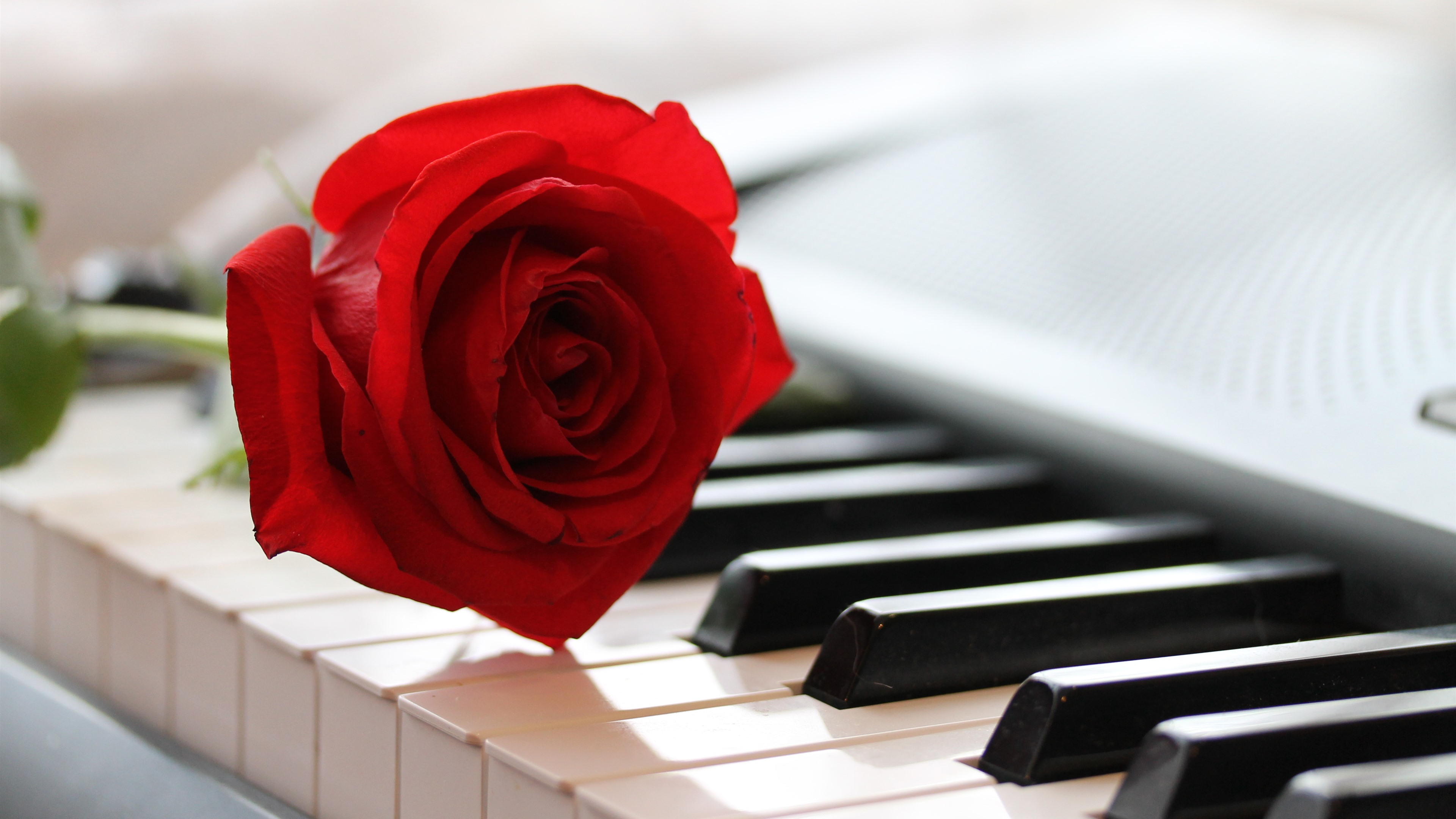 Wallpaper One Red Rose And Piano 3840x2160 Uhd 4k Picture Image