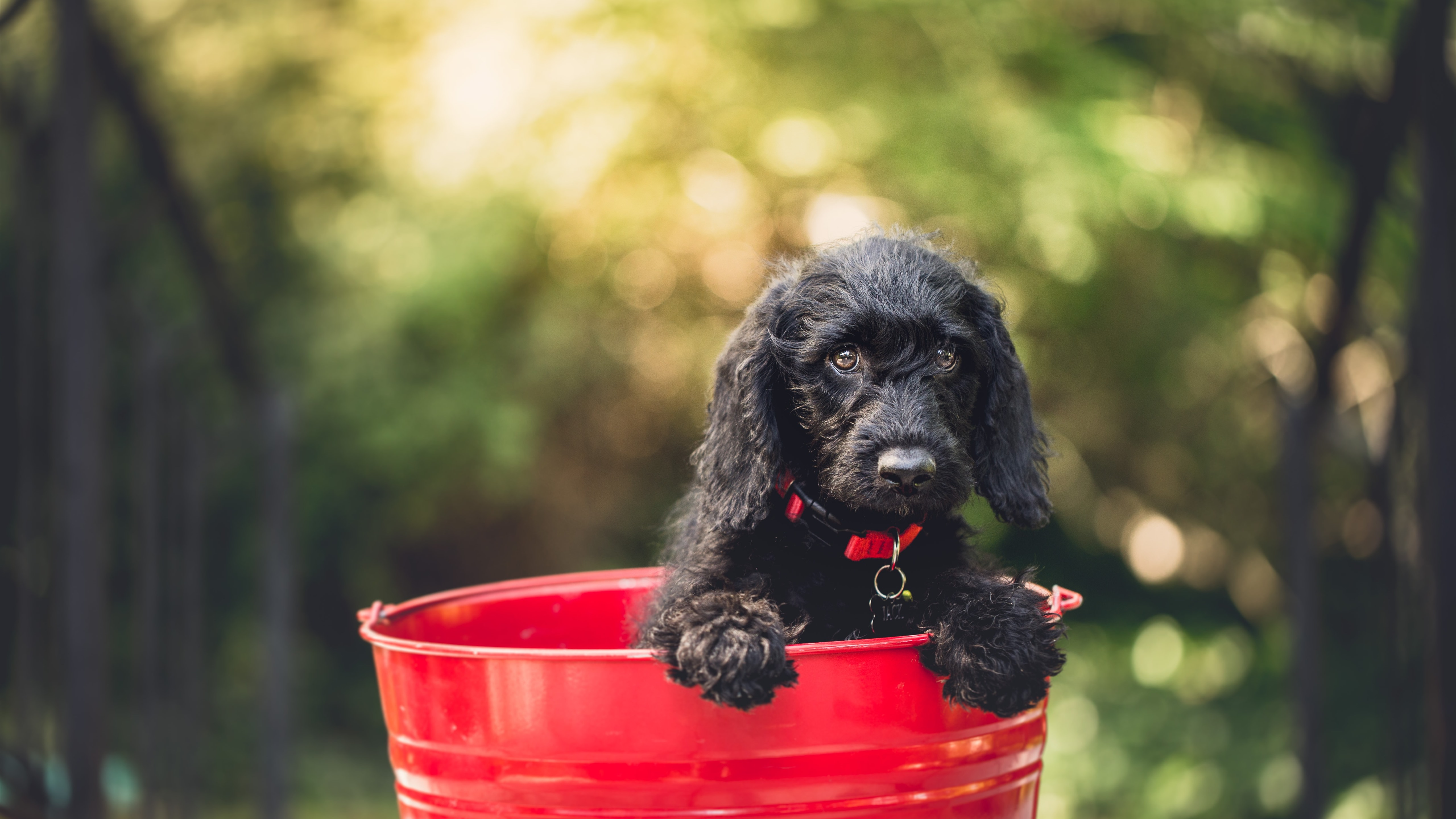 배경 화면 검은 강아지 붉은 양동이 5120x2880 Uhd 5k 그림 이미지