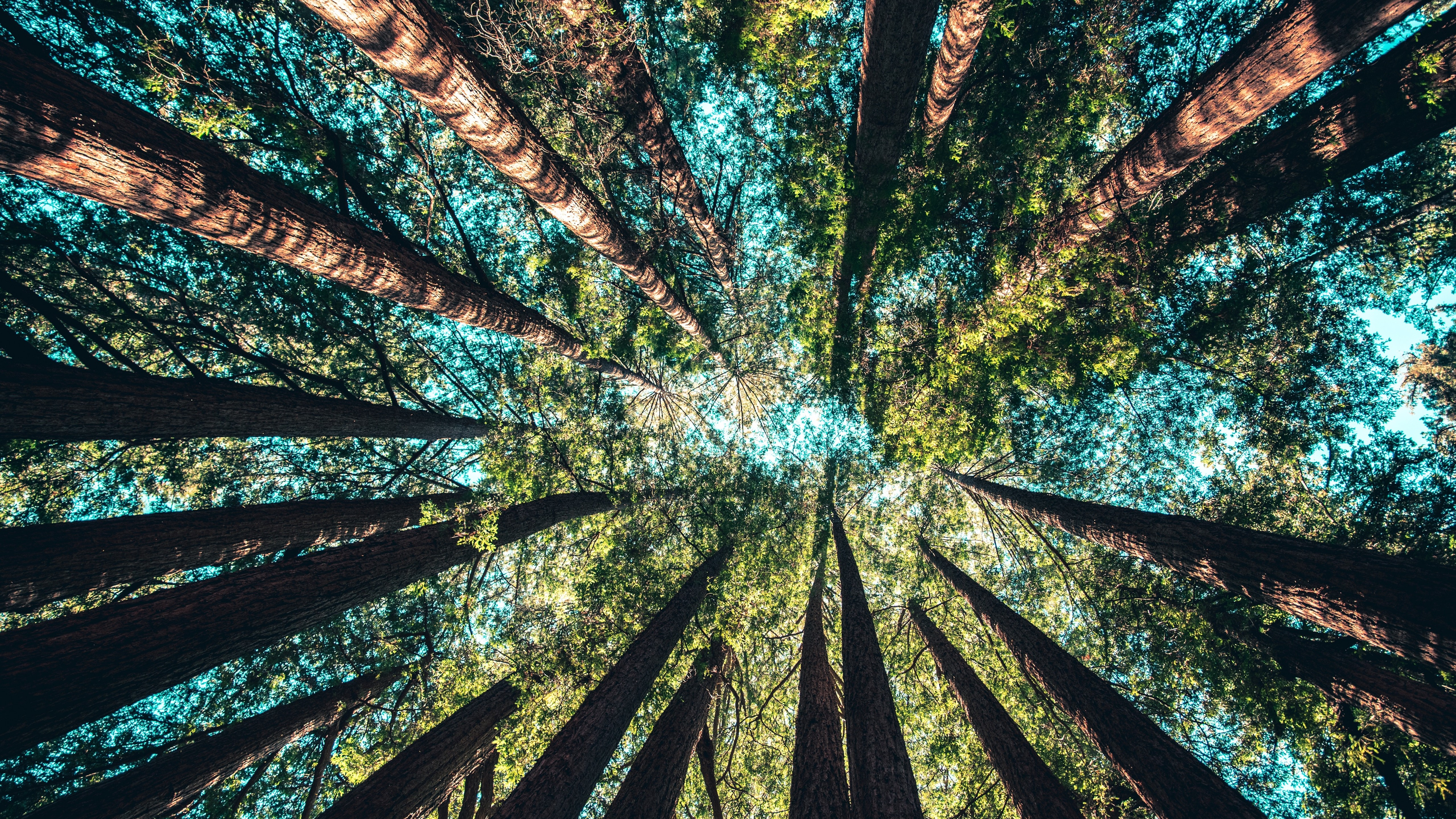 Fonds D écran Forêt Arbres Vue Bas éblouissement Ciel