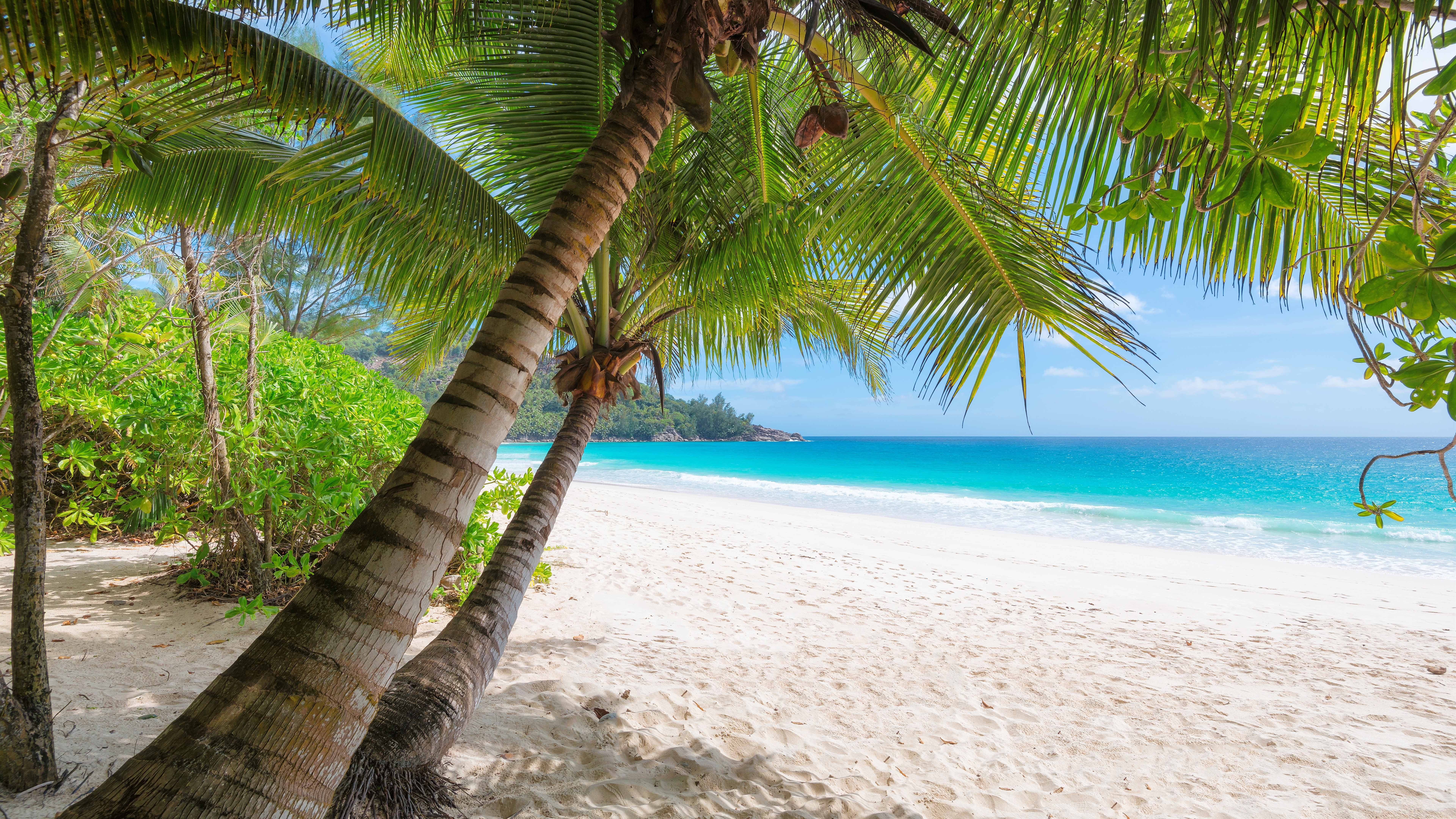 Wallpaper Palm Trees Beach Sea Tropical Summer 7680x4320 Uhd 8k Picture Image