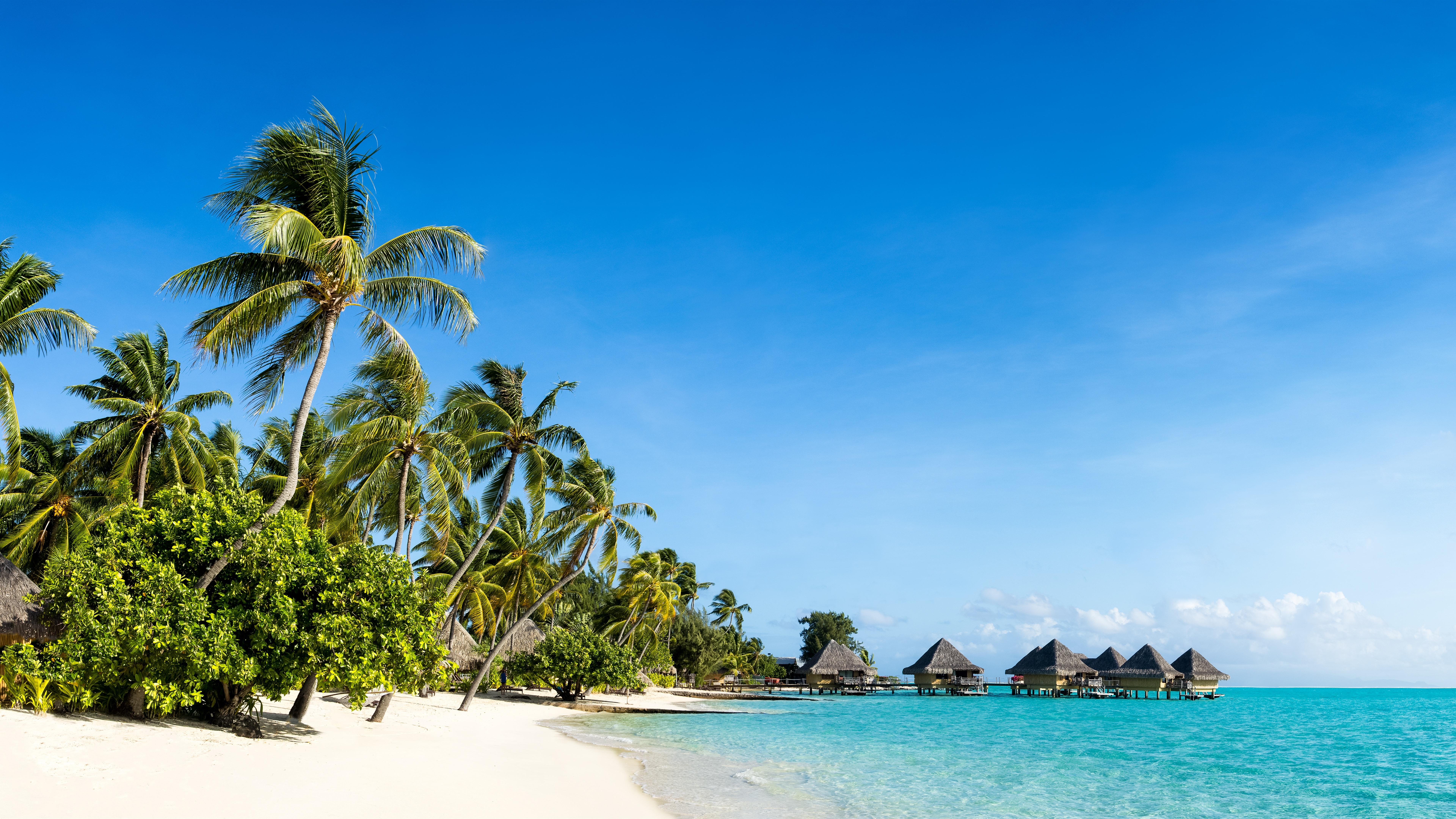 Nature Scenery Beach Sea Palm Trees
