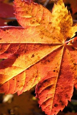 iPhone 배경 화면 가을에는 붉은 단풍