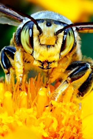 iPhone 배경 화면 꿀벌과 꽃