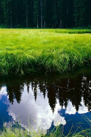 iPhone Wallpaper Clear water surrounded by green grass