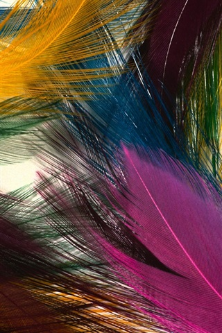 iPhone Wallpaper Colorful feathers