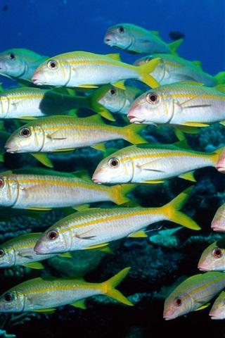 iPhone 배경 화면 물고기의 그룹 언더워터 월드