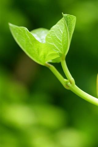iPhone 배경 화면 단지이 작은 나뭇잎의 씨앗을 성장