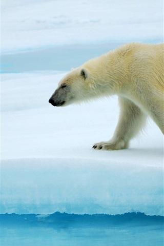 iPhone Wallpaper Polar bears walking on ice