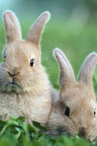 iPhone 배경 화면 풀밭에 토끼