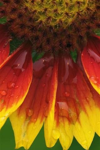 iPhone 배경 화면 해바라기 꽃 매크로 근접