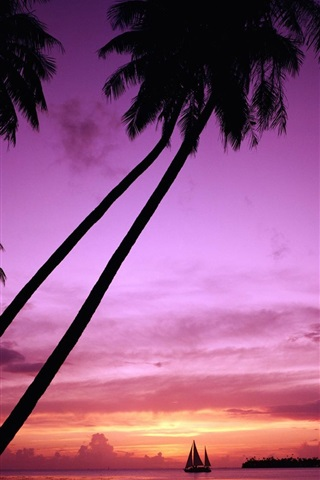 iPhone Wallpaper Sunset palm tree silhouette