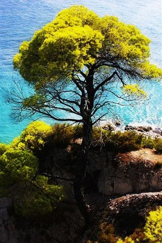 iPhone 배경 화면 푸른 바다 쪽의 절벽에 나무를 서