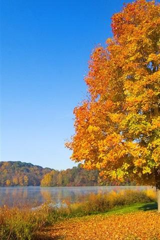 iPhone 배경 화면 가을에 한 붉은 잎 나무
