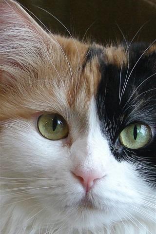 iPhone 배경 화면 트라이 - 컬러 고양이