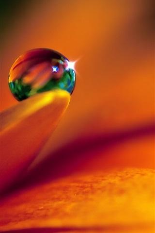 iPhone 배경 화면 클로즈업 꽃과 물 방울의