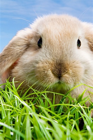 Wallpaper Cute Rabbit 1920x1080 Full Hd 2k Picture Image