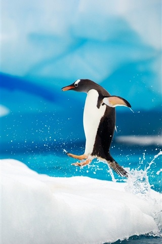 iPhone Wallpaper Happy Antarctic penguins on ice