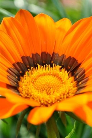 iPhone Wallpaper Orange flower