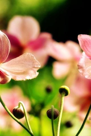 iPhone 배경 화면 핑크 야생화