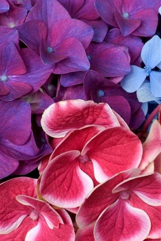 iPhone 배경 화면 빨간색과 파란색 꽃