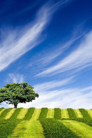 iPhone 배경 화면 언덕 위 나무