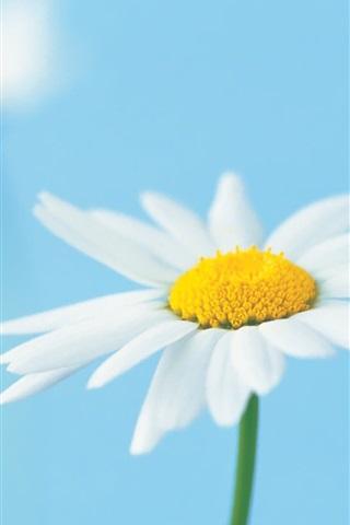 iPhone 배경 화면 두 하얀 꽃