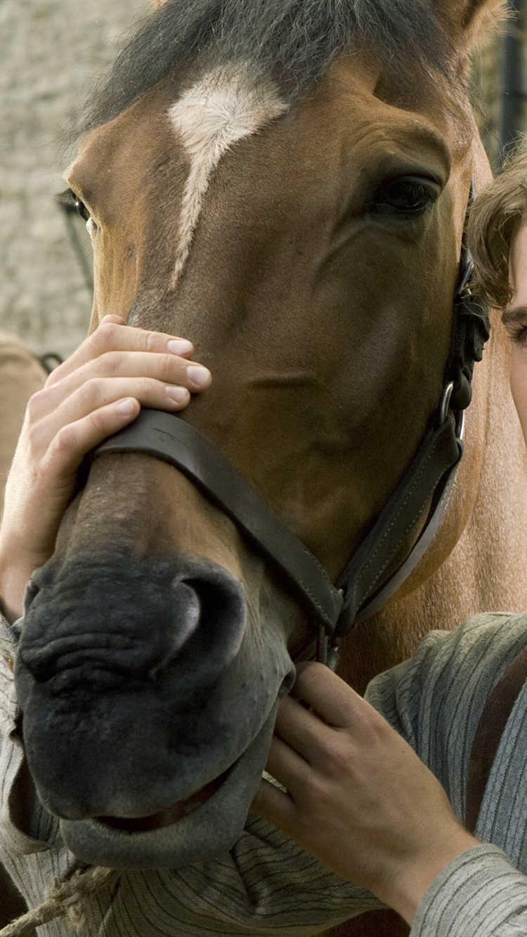 Wallpaper War Horse 2011 2560x1600 Hd Picture Image