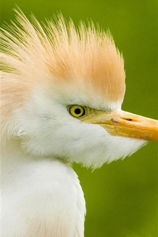 iPhone 배경 화면 흰 작은 새