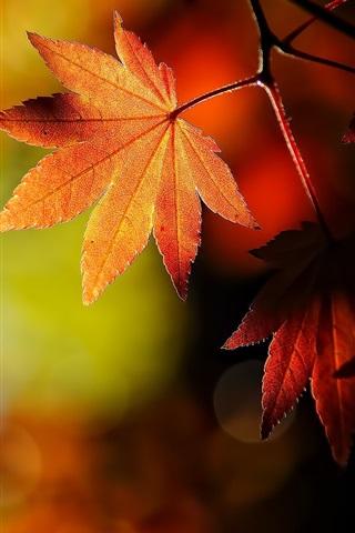 iPhone 배경 화면 가을은 자연을 단풍