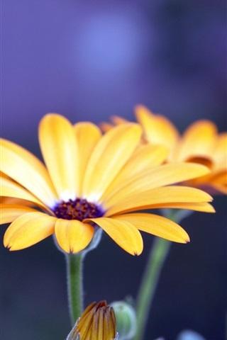 iPhone Wallpaper Flower petals photos beauty close-up