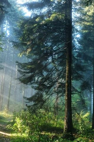 iPhone 배경 화면 숲의 나무와 빛을 광선