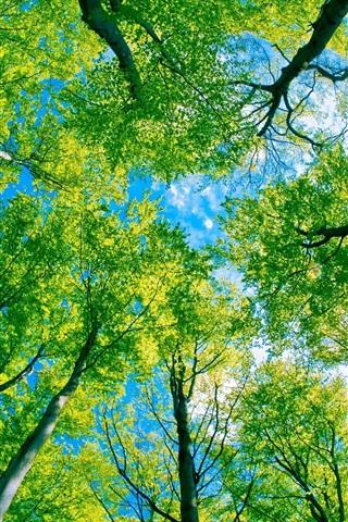 iPhone 배경 화면 숲 나무 그린 파라다이스