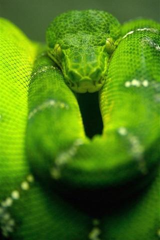 iPhone 배경 화면 그린 뱀