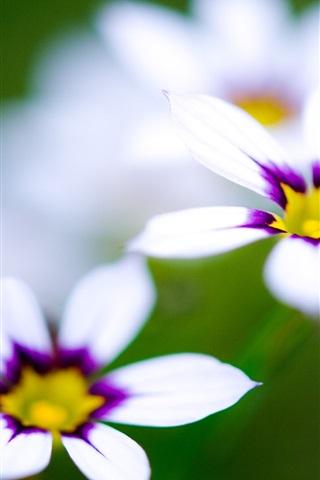 iPhone 배경 화면 매크로 흰색 꽃