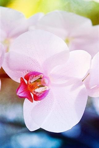 iPhone Wallpaper Orchid flowers macro