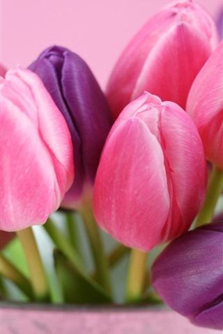 iPhone 배경 화면 핑크와 보라색 튤립 꽃